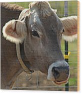 Grinning Cow Wood Print