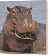 Grinning Hippo Wood Print