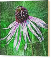 Gritty Coneflower Wood Print