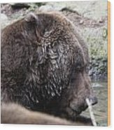 Grizzley - 0003 Wood Print