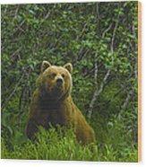 Grizzly Bear Alaska Wood Print