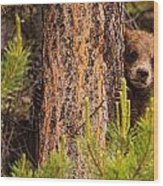 Grizzly Bear Cub Up A Tree, Yukon Wood Print