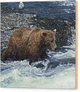 Grizzly Bear Fishing Wood Print