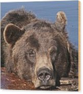 Grizzly Bear In Water Wood Print