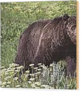 Grizzly Bear In Yellowstone Neg.28 Wood Print