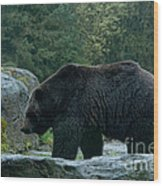 Grizzly Bear Or Brown Bear Wood Print