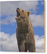 Grizzly Bear Roaring Wood Print