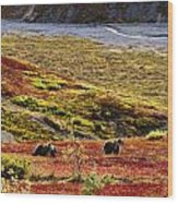 Grizzly Bears And Fall Colours, Denali Wood Print