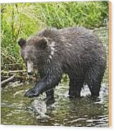 Grizzly Cub Catching Fish In Fish Creek Wood Print