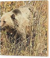 Grizzly In The Brush Wood Print