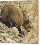 Grizzly On The Rocks Wood Print