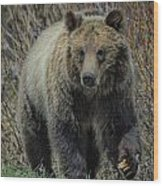 Grizzly Ramble Wood Print
