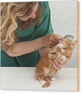 Grooming A Kitten Wood Print