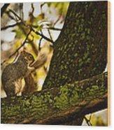 Grooming Grey Squirrel Wood Print