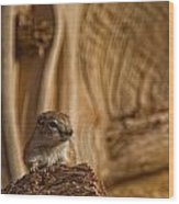 Ground Squirrel At Monument Valley Wood Print