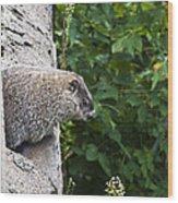 Groundhog Day Wood Print