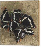Group Of Butterflies Wood Print