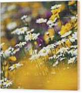 Group Of Daisies Wood Print