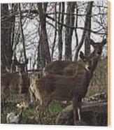 Group Of Deer Wood Print