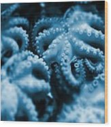 Group Of Octopuses Wood Print by Victor Habbick Visions