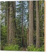 Group Of Redwoods Wood Print