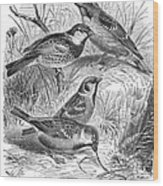 Group Of Sparrows Wood Print