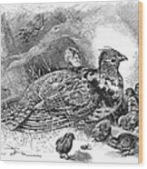 Grouse And Young Wood Print