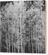 Grove Of Aspen Trees (populus Tremuloides), In Late Afternoon Wood Print