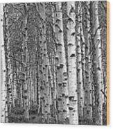 Grove Of Birch Trees Wood Print