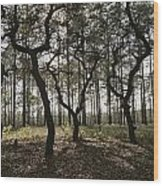Grove Of Trees In The Ocala National Wood Print