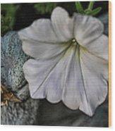 Grundgy Petunia Wood Print