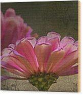 Grungey Pink Zinnia Delight Wood Print