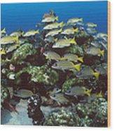 Grunt School Along Coral Reef Cocos Wood Print by Flip Nicklin