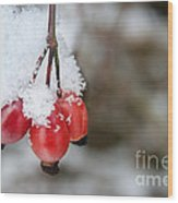 Guelder Rose In The Snow Wood Print