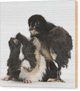 Guinea Pig And Black Bantam Chick Wood Print