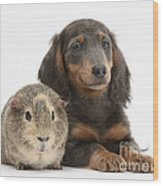 Guinea Pig And Blue-and-tan Dachshund Wood Print