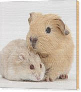 Guinea Pig And Hamster Wood Print