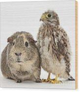 Guinea Pig And Kestrel Chick Wood Print