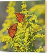 Gulf Fritilaries On Golden Rod Wood Print