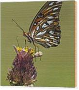 Gulf Fritillary Butterfly - Agraulis Vanillae Wood Print