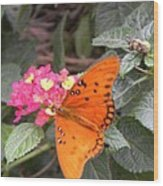 Gulf Fritillary Butterfly At Work Wood Print