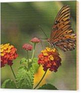 Gulf Fritillary Butterfly On Colorful Lantana  Wood Print
