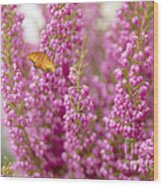 Gulf Fritillary Butterfly On Passionate Pink Flowers Wood Print