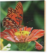 Gulf Fritillary On Zinnia Wood Print