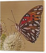 Gulf Frittilary Wood Print