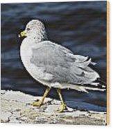 Gull 2 Wood Print
