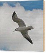 Gull 2400 Wood Print
