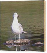 Gull - Don't Get Wet Feet Wood Print