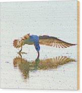 Gull Feeding On Lake Wood Print