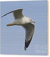 Gull In Flight . 7d12084 Wood Print